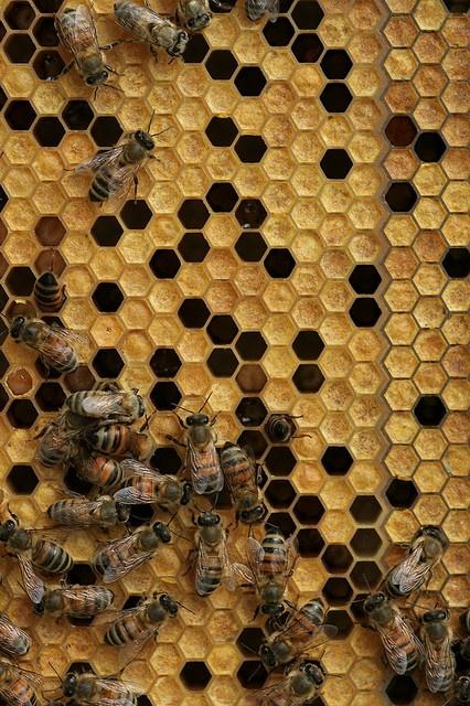Pčela - Page 2 7067b38ae41d0d28225a305efd18c3e9