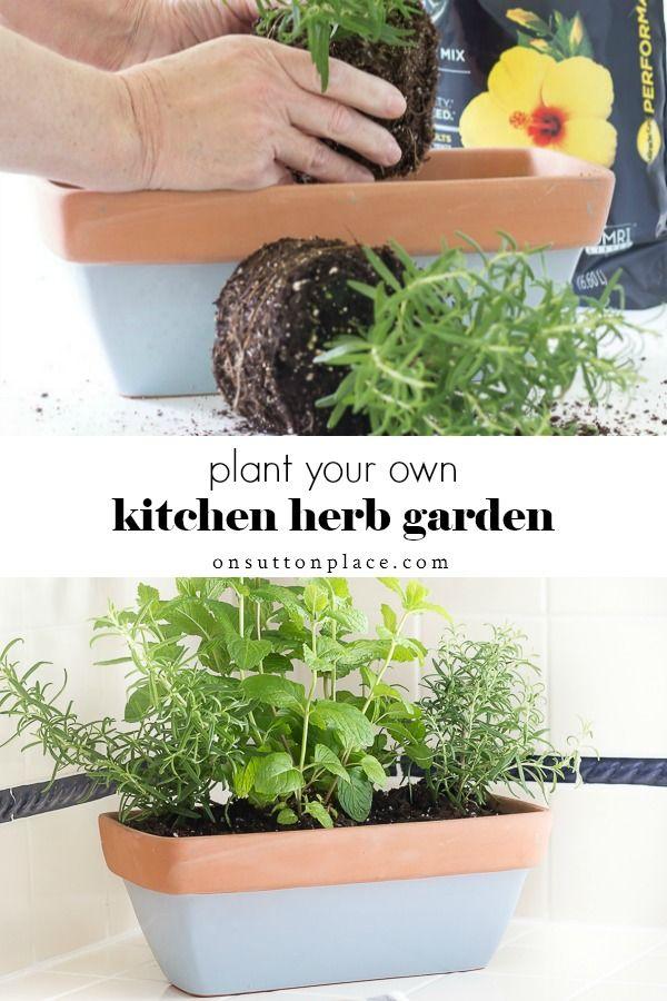 Pin On Best Herb Garden Ideas