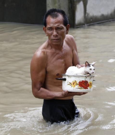 Katzenrettung: In einem Kochtopf bringt ein Mann in Manila seine Katze in Sicherheit. Der Taifun Halong hat die Monsun-Regenfälle verstärkt, was zu Überschwemmungen im Norden der Philippinen geführt hat. Mehr Bilder des Tages auf: http://www.nachrichten.at/nachrichten/bilder_des_tages/cme10133,1116418 (Bild: Reuters)