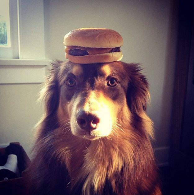 And this burger. | Amanda Seyfried's Dog Is America's Hidden Treasure