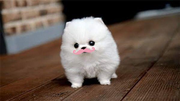markiplier : Pink mustache makes EVERYTHING better!
