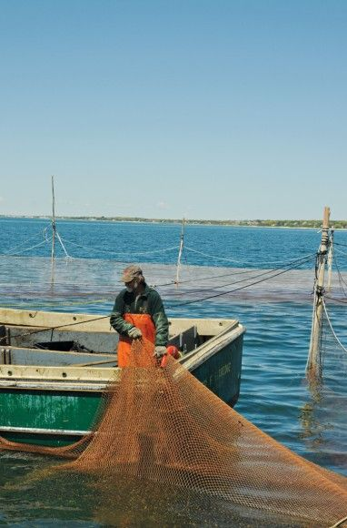 Weir-Fishing_Shareen-Davis_0013