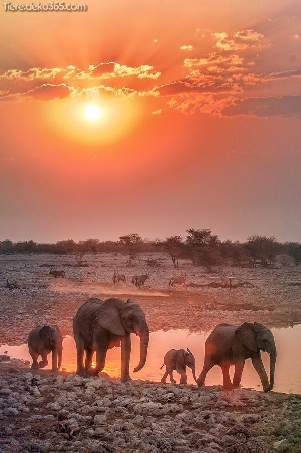 Unglaubliche Beste Elefantenfotografie