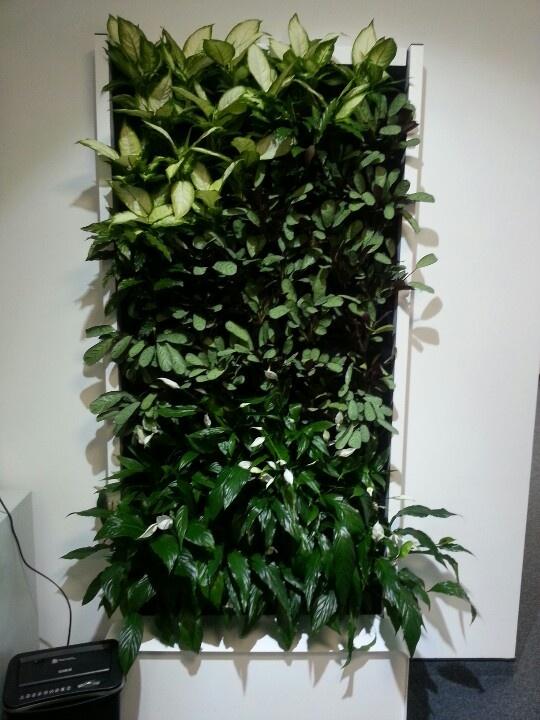 Standart vertical garden