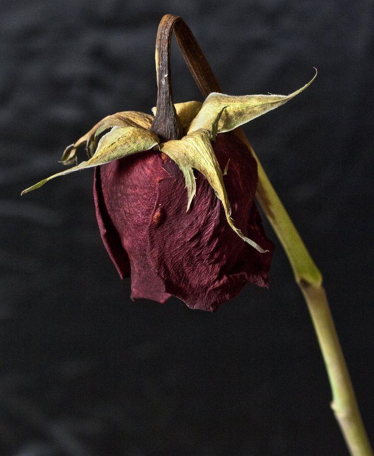 сразу картинка умирающего растения проводились тренировки