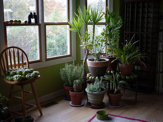 9 plantes-interieur puiifiiantes