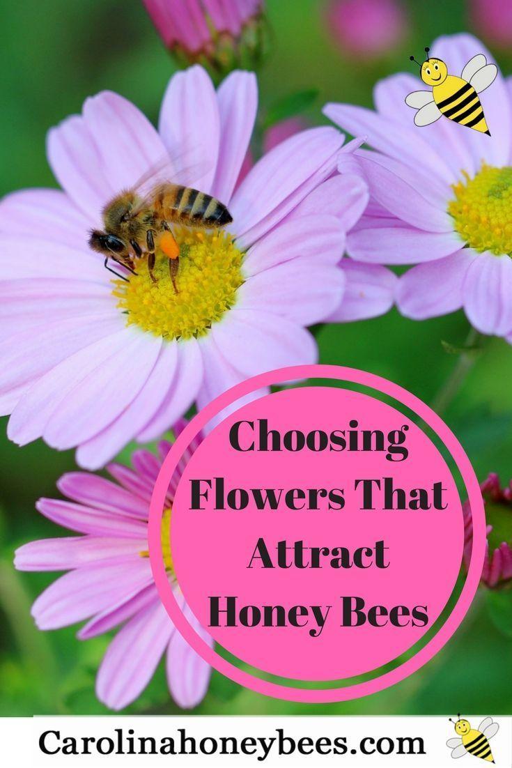 Elegant Choose flowers that attract honey bees Carolina Honeybees