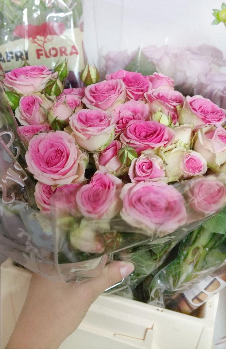 Ružové kríčkové ruže MIMI EDEN #beautifulflower #roses #pinkroses #slovakia #kvetyexpres