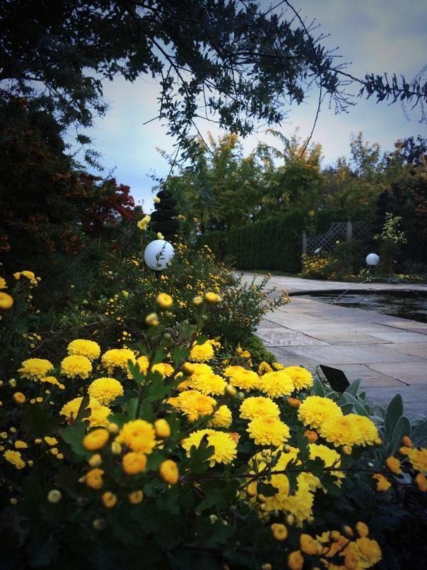 """A&W ボタニックガーデンさんはTwitterを使っています: """"ふんふんふーん♪ 秋を満喫 (^-^) 独特なモノ哀しさは、この季節でしか味わえない。 それにどっっぷりと浸りながら、ゆーっくりと歩をすすめる。 …イイじゃないですか (^-^) 本日のご来園ありがとうございました。 【F】 http://t.co/YU54YGeiak"""""""