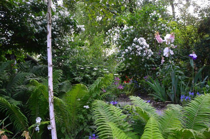 English Garden irys, ogrod w stylu angielskim copyright Anna Skorupska