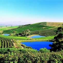 Jordan Wine Estate features a wine tasting centre, a conference centre and world-class restaurant where visitors can relax and enjoy fine Cape wines and local fare surrounded by breathtaking vineyards.    The Restaurant at Jordan is a Gourmet Nominee in the Klink awards