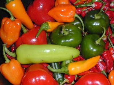 Chilli peppers may help cure migraines
