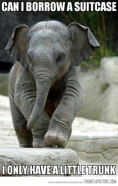 A little trunk…OMG this is the cutest! I love little elephant! Eeeeeee!!!!!!!!