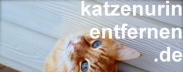 Katzenurin entfernen