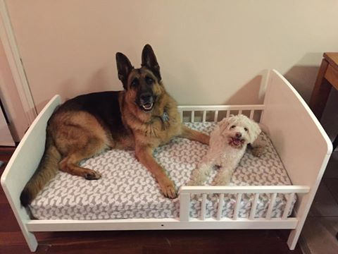 Second hand toddler beds make great dog beds for large breed dogs.