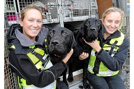 """Wagtail Ltd UK sniffer dog handlers  with Murphy and Ozzie. Did you Nose's a dogs Nose is 1000 times better than our Nose. """"Who's a good Nose then"""""""