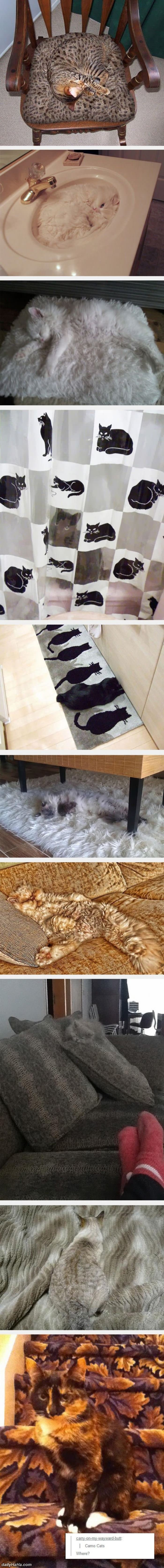 Camo Cats - the newest game of find the cat. DancingPetNaturalProducts.com