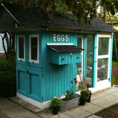 For our chickens....I want fresh eggs!