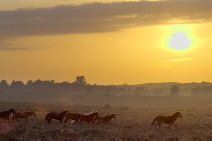 New Forest ponies and sunset ¦ www.thenewforest.co.uk