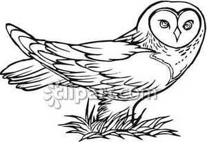 drawings of owls in black and white | Black and White Owl Standing In Grass - Royalty Free Clipart Picture
