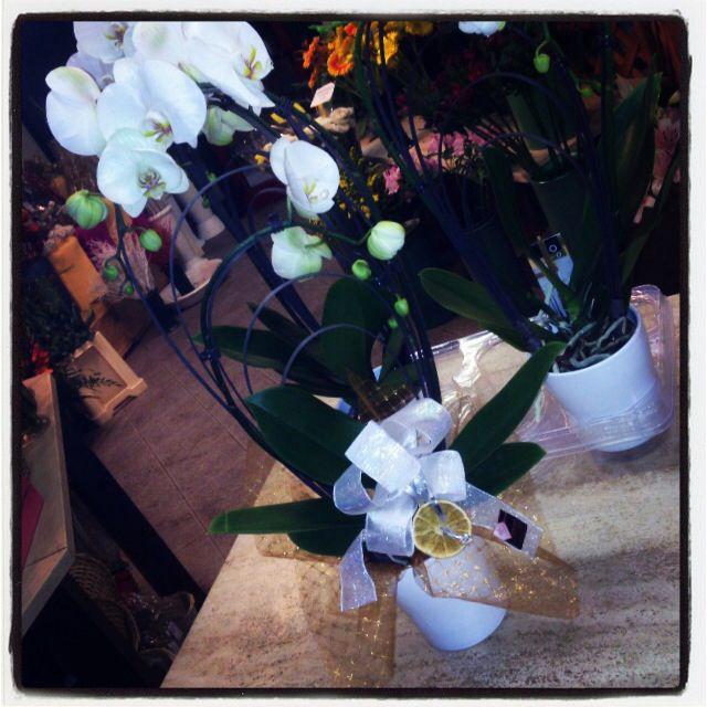 Orchidea con vaso a partire da 30€ lo puoi acquistare su www.fioreriasarmeola.com