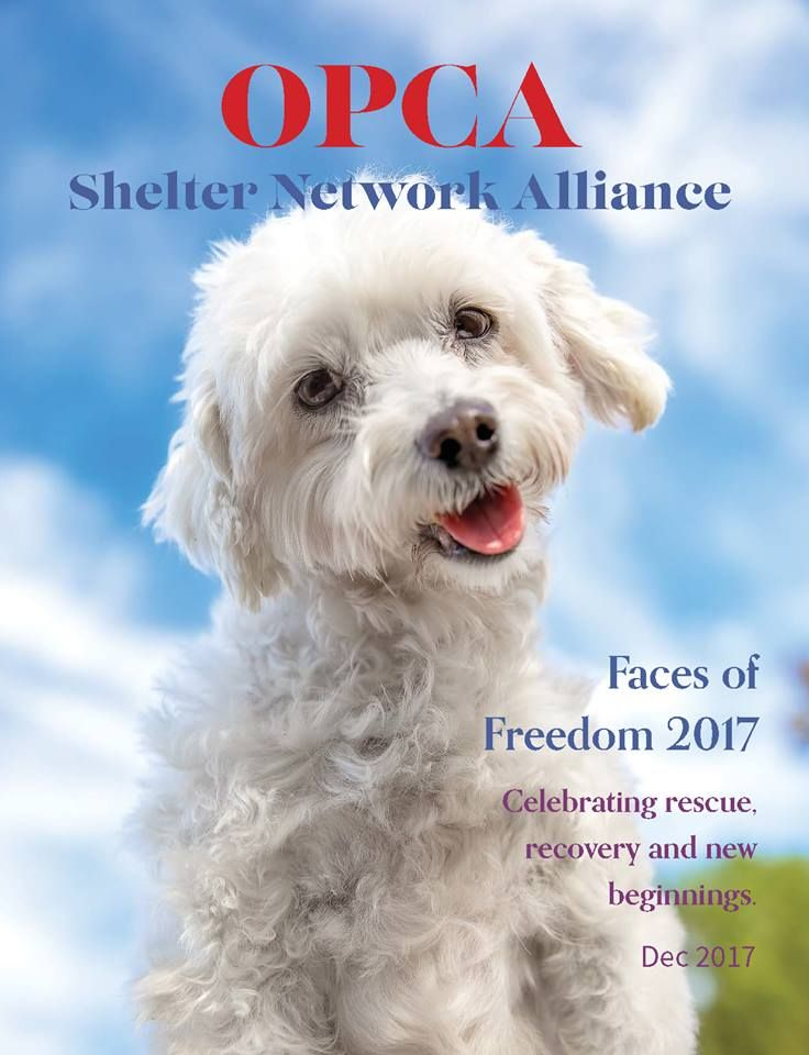 Https Www Facebook Com Opca Shelter Network Alliance Poodles Mixedpoodles And Smalldogs Dogs Needhomes Please Follow And Like This Page York Dog