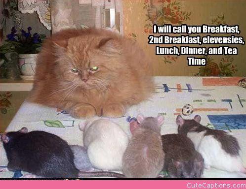 Naming the Pets: Lol Cat, Cat Funny, Cat Humor, Catscrazyyet Awesome, Lotr Humor, Crazy Cat, Animal Yay, Animal Funny, Cat Names