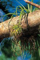 Los grandes �rboles son el soporte para muchas especies del bosque