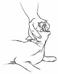 how to save a choking #cat : Step 1: Approach the cat carefully. If your cat is nervous or anxious, restrain the cat if necessary. Step 2: Clear the cat's airway. Step 2a: Place one hand over the cat's head so that your thumb and index finger fall just behind the long canines (fang teeth), the head resting against your palm. If the cat is struggling too much, proceed to Step 2e.