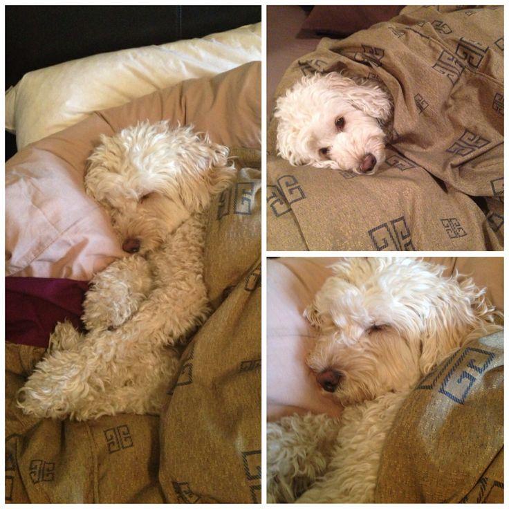 Bailey .... It's a hard life!