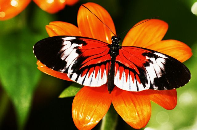 35 most beautiful butterfly pictures