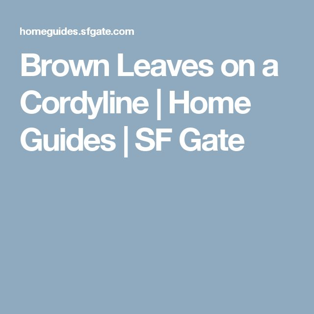 Brown Leaves on a Cordyline | Home Guides | SF Gate