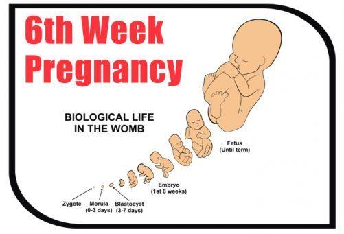 6th Week Pregnancy