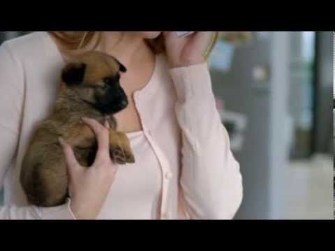 [VIDEO]: THIS SINGLE DAD HAS HIS PAWS FULL Electrabel - Kito is papa geworden van 5 schattige puppy's! - telefoon
