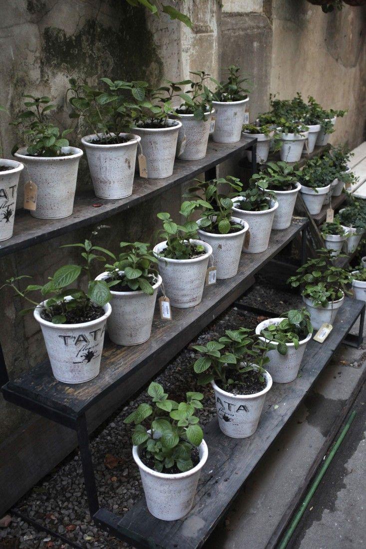 Taca Flower Shop Buenos Aires | Gardenista