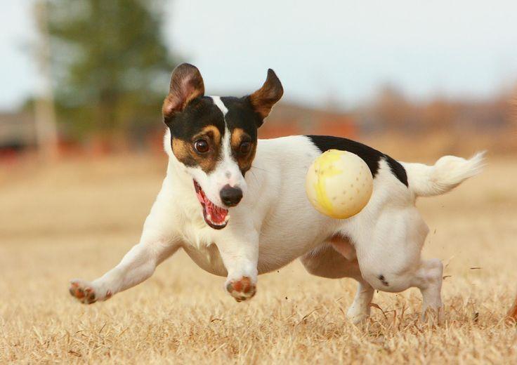 Anjing Kita Paling Senang Saat.. ~ Tips Info Cara