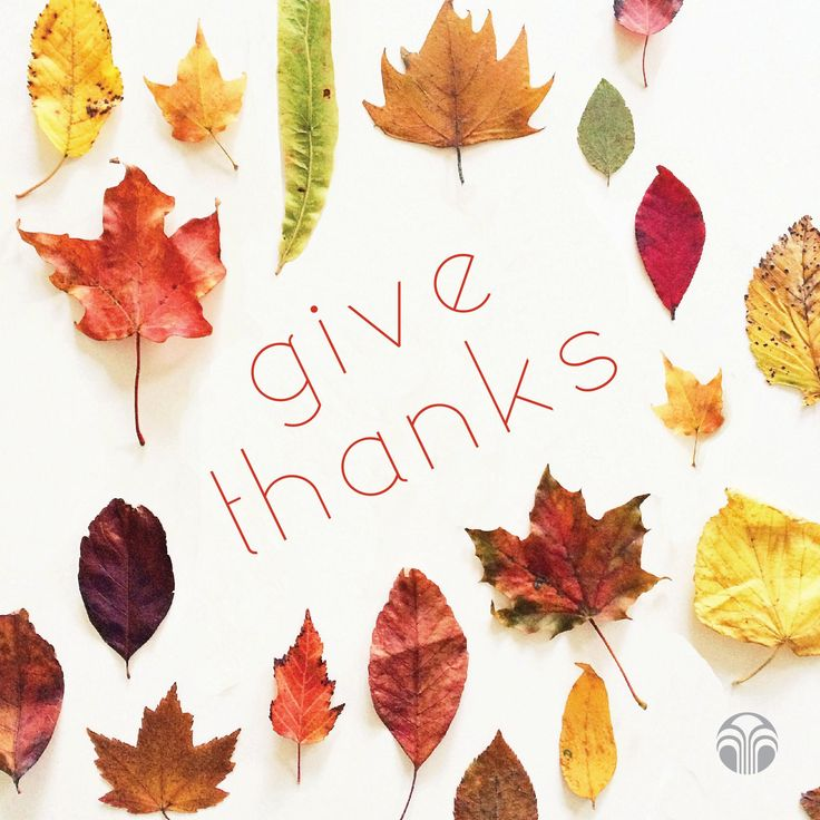 Happy Thanksgiving from Nu Skin!