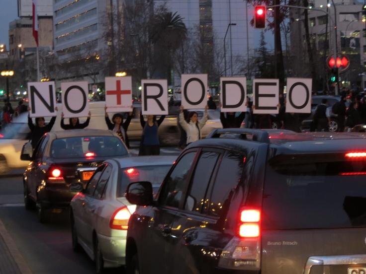 El rodeo es la tradición más cruel que aún se desarrolla en Chile y zona centro sur principalmente.-