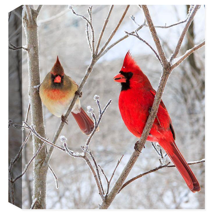 Mr. & Ms. Cardinal - Fine Art Canvas Print