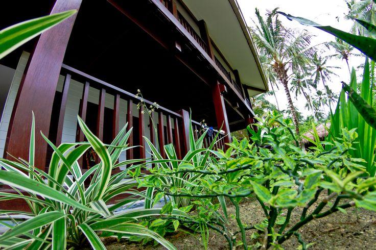 Sumatran Sanctuary...     Image_ Mick Curley