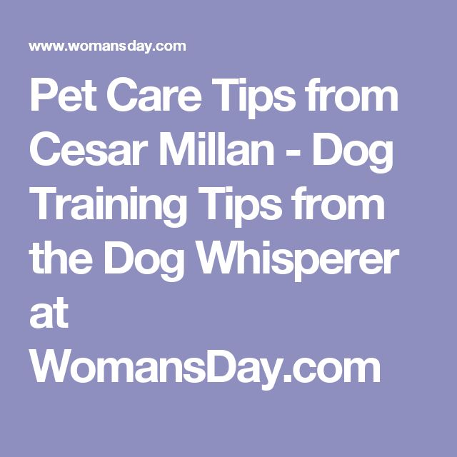 Cesar Millan Dog Training Advice