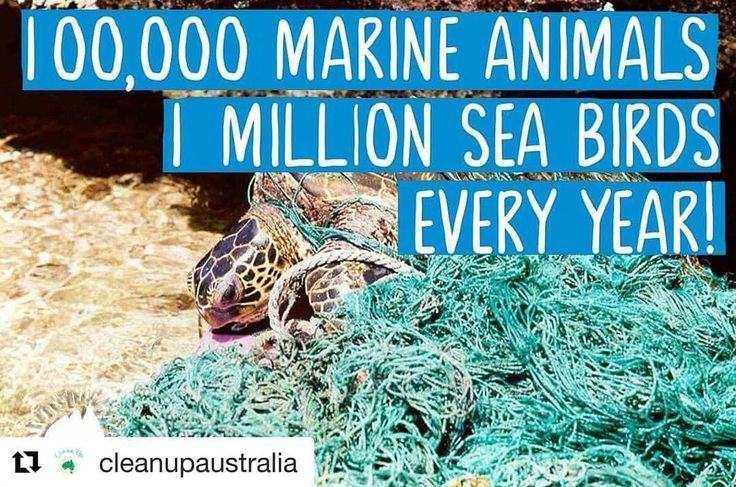 """22 Likes, 3 Comments - Noggin (@scratchyanoggin) on Instagram: """"The good people at @cleanupaustralia tell us that marine debris kills over 100,000 marine animals a…"""""""