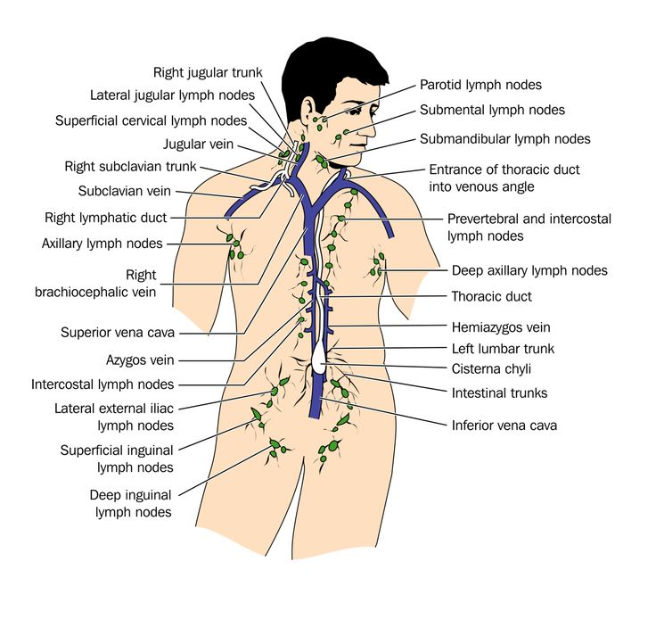 Body Chart Lymphatic Drainage Detox Lymphatic System
