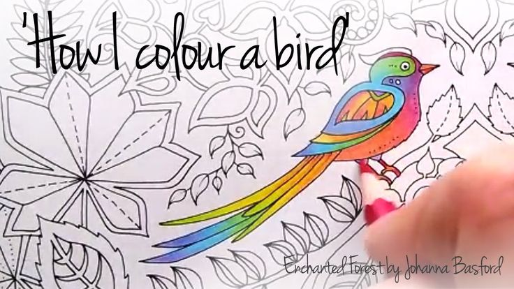 How I colour a bird (blending colours); Enchanted Forest - Johanna Basford [Check related pins]