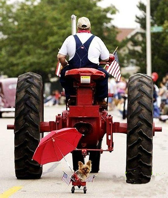 LoL  Pulling a heavy load!Tractors Pulled, Happy Birthday, Animal Pictures, Laugh, Dogs, Country Boys, Funny Stuff, Humor, Animal Photos
