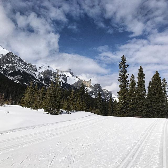 Enjoying the last few ski days left before the snow melts at the Canmore Nordic Centre. Lots of green trails for this newbie and great for kids! #explorealberta #crosscountryskiing #canmore