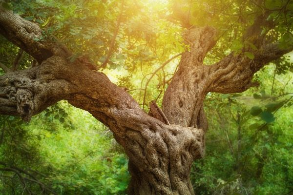 If a tree could talk, this is what I think it would say. | George Helou Blog Site