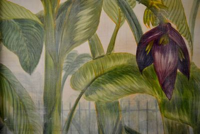 Banana flowers in the parlor