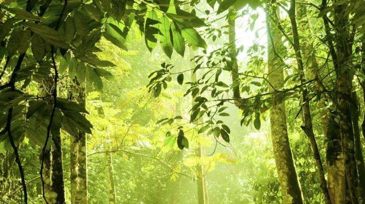 Tæt jungle på Borneo