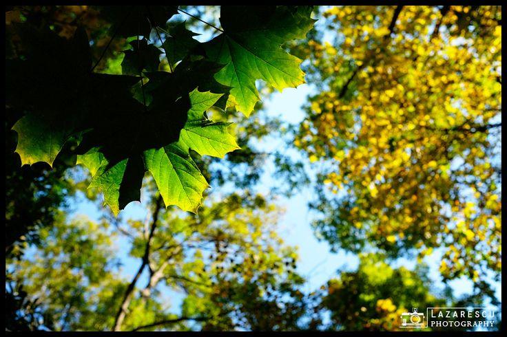 Autumn transition - Autumn mood ...